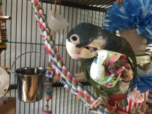 Discount Bird Toys : Bird toys n stuff archives best in flock a parrot blog